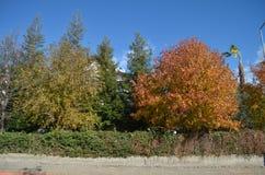 Bäume von verschiedenen Farben im Herbsttruthahn Stockfotografie