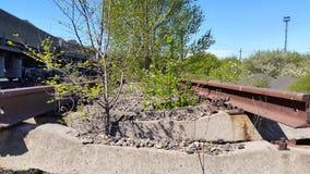Bäume wachsen auf den alten Bahngleisen Lizenzfreies Stockfoto