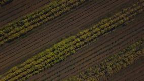 Bäume wachsen nach ihrem Grundsatz Geschossen auf Brummen stock video