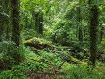 Bäume WALDLAND-tranqillity wild wachsender Pflanzen Stockfotos