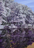 Bäume werden im Fluss, nfrared Foto reflektiert Lizenzfreie Stockfotos