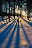 Bäume in Winter 2 Lizenzfreies Stockfoto