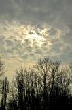 Bäume, Wolken und Vögel Stockbilder
