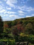 Bäume in Yorkshire Stockbilder
