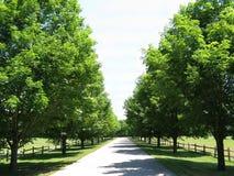 Bäume zeichnen einen Landweg an einem sonnigen Sommertag Stockbilder
