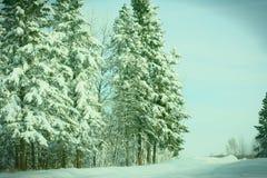 Bäume zum Himmel Lizenzfreies Stockfoto
