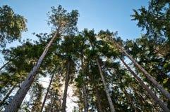 Bäumen oben betrachten Lizenzfreie Stockfotografie