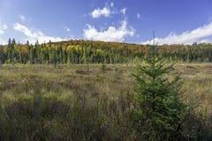Bäveräng i höst - Ontario, Kanada Arkivbild