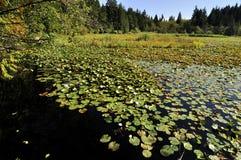 Bäver Lake i den Stanley parken Fotografering för Bildbyråer
