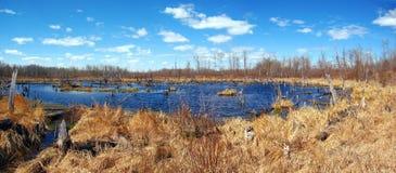 Bäver sjö i älgönationalparken, Alberta, panorama Fotografering för Bildbyråer