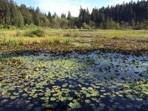 Bäver sjö i våren, Vancouver, British Columbia, Kanada Royaltyfri Fotografi
