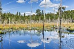 Bäverdamm med vit som böljer moln som reflekterar i vattnet Arkivbilder