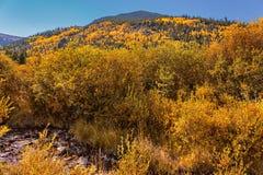 Bäverdamm; Rocky Mountain National Park royaltyfri bild