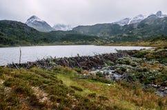 Bäverfördämning i Dientes de Navarino, Patagonia, Chile arkivbild