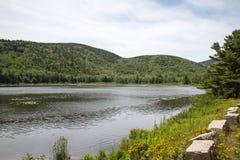 Bäverfördämningdamm i Acadianationalpark royaltyfria bilder