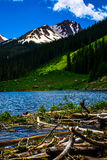Bäverfördämningkorsning som heading upp Rocky Mountain High Royaltyfri Fotografi