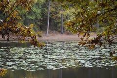 Bäverhålan på Lindale parkerar i Lindale Texas Nov 18 2018 arkivbild