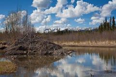 bäverloge s Fotografering för Bildbyråer