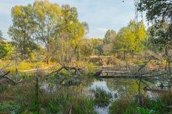 Bäverpöl - översvämmad skog - träsk Royaltyfria Foton