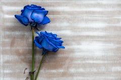 Błękit róży zbliżenie zdjęcie royalty free