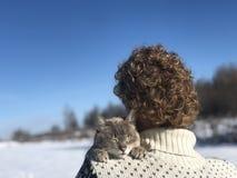 Błękitnoocy szarobiali Syjamskiego kota uściśnięcia z miłością i oddaniem swój właściciel - blondynka z włosami facet Kot był gub zdjęcia stock