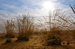 Błedowska Desert Stock Image