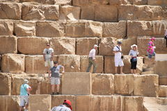 Både gammalt och fikonträdet klättrar pyramiden Arkivbild