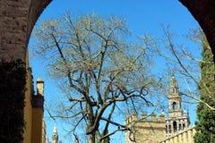 Båge som inramar övredelen av domkyrkan av Seville, Spanien royaltyfri fotografi