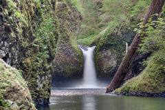 Bålskålnedgångar på Eagle Creek Closeup Royaltyfri Fotografi