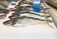 Bås av den djupfrysta fisken på försäljning på supermarket royaltyfri foto