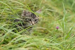 Bébé de chats observant dans le pré Image libre de droits