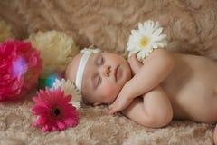 Bébé de sommeil en fleurs Images libres de droits