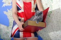 Bébé des Anglais Shorthair Images libres de droits