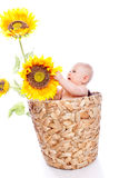 Bébé en tournesols Photos stock