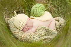 Bébé escargot Photos stock