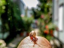 Bébé escargot minuscule Photos libres de droits