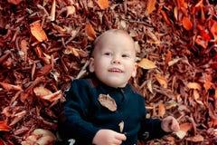 Bébé garçon dans les bois Images stock