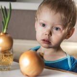 Bébé garçon et ciboulette fraîche Photographie stock