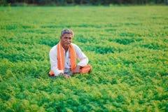 Bébé garçon indien mignon jouant à l'agriculteur gardenIndian au gisement de pois chiche images stock