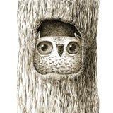 Bébé mignon Owl Sitting In la cavité d'arbre Photographie stock libre de droits