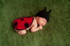 Bébé nouveau-né utilisant un costume de coccinelle photo libre de droits