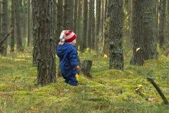 Bébé sur une promenade dans la forêt de pin Image stock