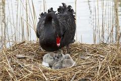 Bébés d'amour maternel Image stock