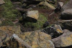 Bébés phoques Image stock