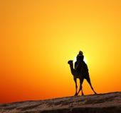 Bédouin sur la silhouette de chameau contre le lever de soleil photos stock