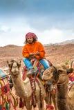 Bédouin sur le chameau, PETRA, Jordanie Photo stock