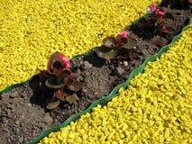 Bégonia et gravier jaune coloré Image libre de droits