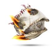 Béisbol aislado de la llama del fuego fotos de archivo