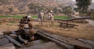 Bétail et waterwheel Photographie stock libre de droits
