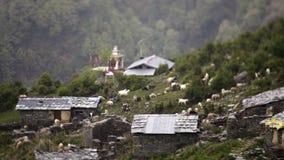 Bétail frôlant près des maisons sur la pente de montagne banque de vidéos